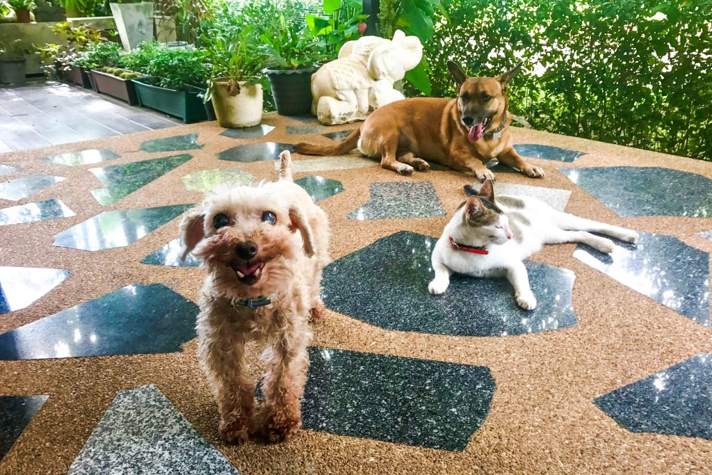 House and pet sitting is an amazing way to save money while you travel. It's well-suited to long-term travel and ideal for digital nomads, but with some flexibility, anyone can be a housesitter. Read more about the benefits of housesitting and how to get started, plus experiences from Southeast Asia.