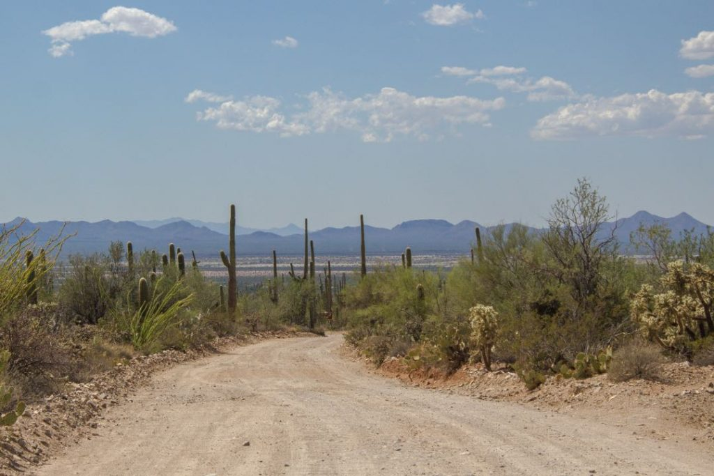 Dirt road with shrubs and cactuses on both sides and mountains in the background.
