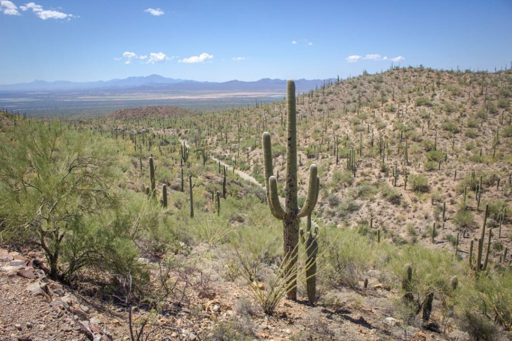 Hill covered in dirt, shrubs, and cactuses, with mountains in the background.