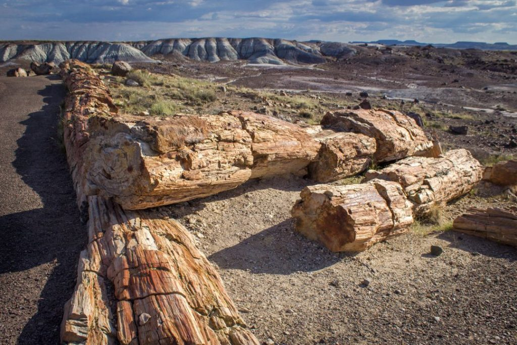 Close-up of petrified tan logs in front of colored badlands hills.
