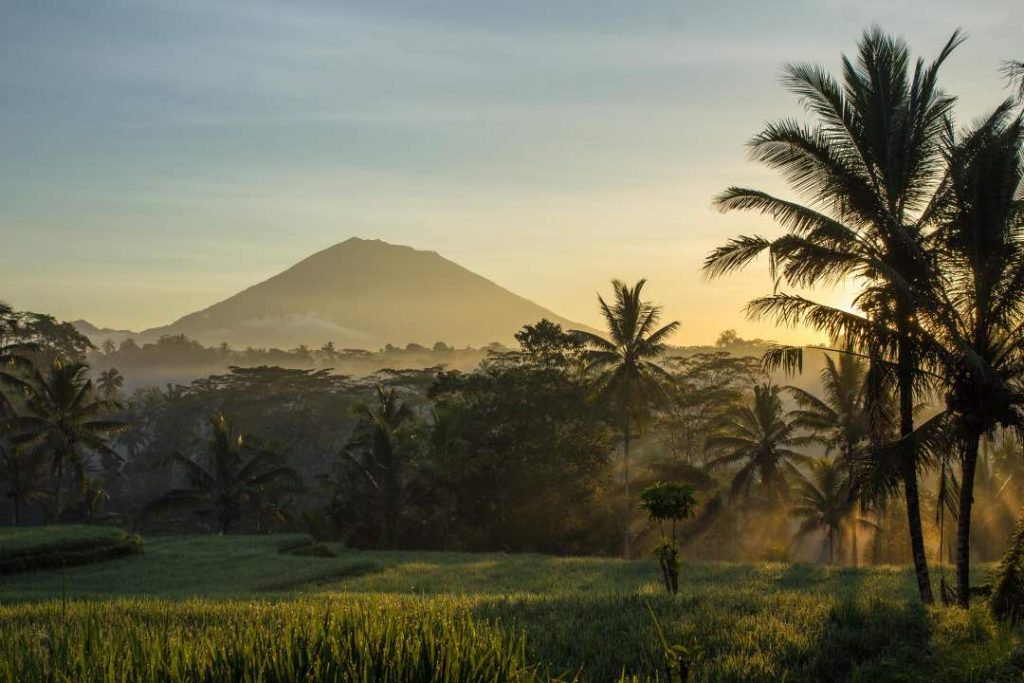 A rice field in the foreground is covered in a light layer of fog with palm trees allowing a few streaks of light to filter through. A volcano sits in the distant background.