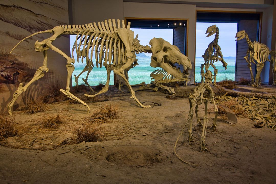 Four skeletons of ancient mammals varying in size on a sandy surface with a bone pile to the right of the skeletons.
