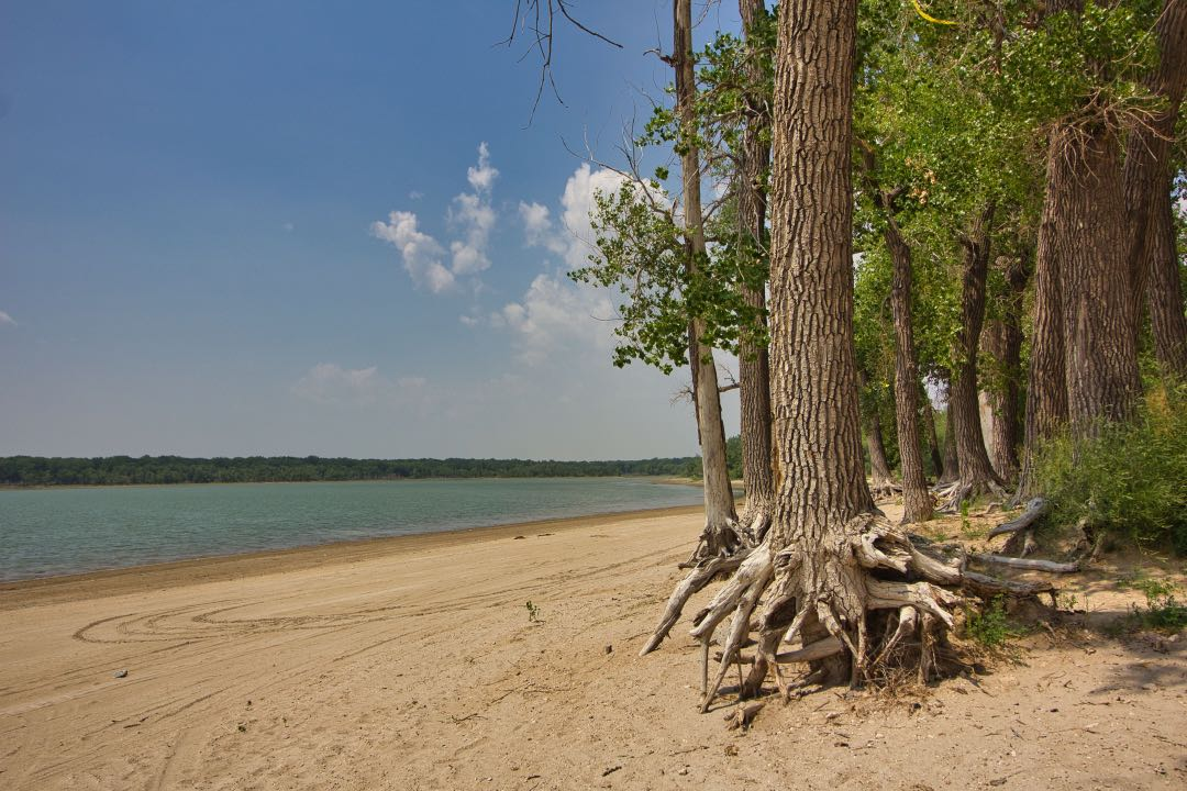 Trees with exposed roots sitting above a sandy beach with azure waters in the background.