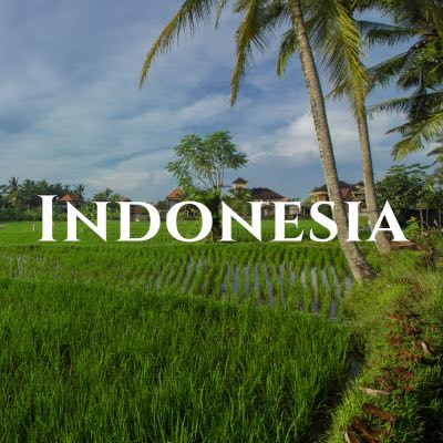 """""""Indonesia"""" written across a photo of bright green rice paddies and palm trees."""
